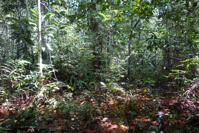 Strict Safeguards Crucial for New Central African Forests Initiative Partnership that could Strengthen the Congo's Peatland                         #HVWEnvironment